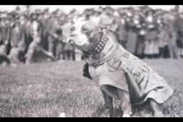 Le soldat Stubby, héros de la première guerre Mondiale, décoré de la croix de guerre