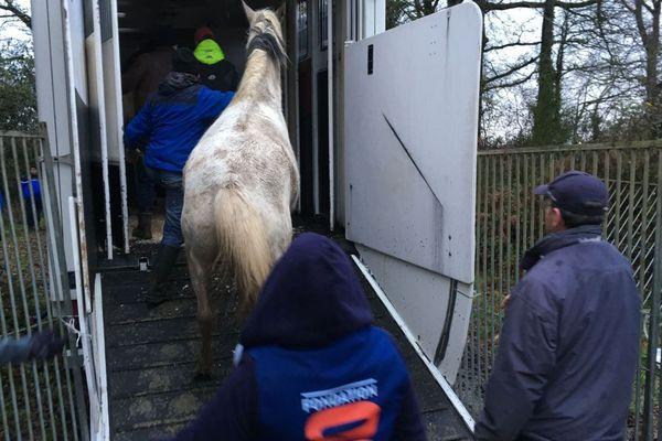les chevaux pris en charge par les associations de protection des animaux en janvier 2018