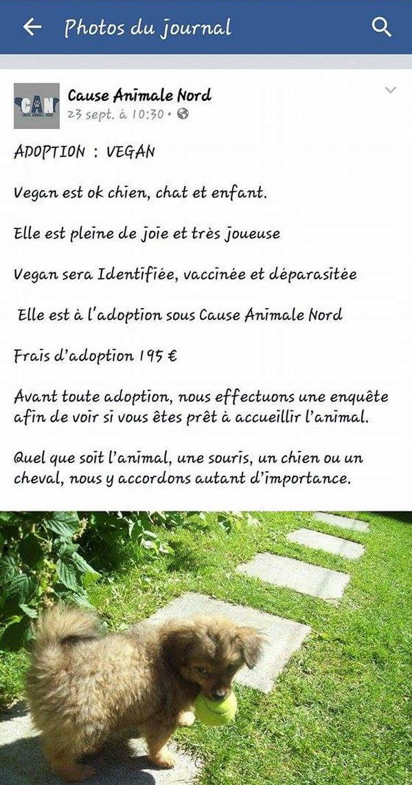 L'annonce de Cause Animale Nord de mise à l'adoption de la chienne volée à un SDF à Paris. Annonce retirée depuis.