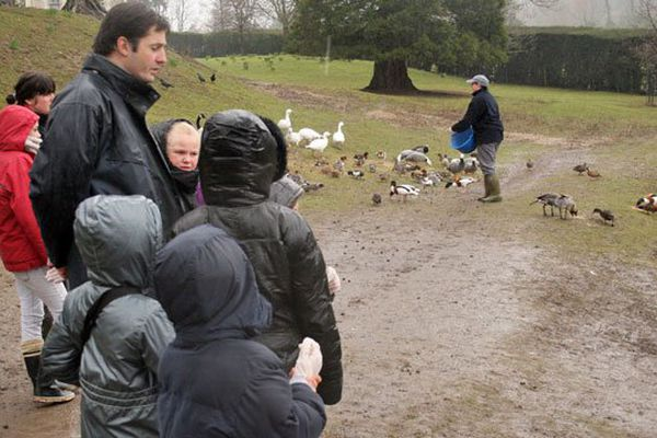 Le nourrissage des oiseaux au parc de Clères