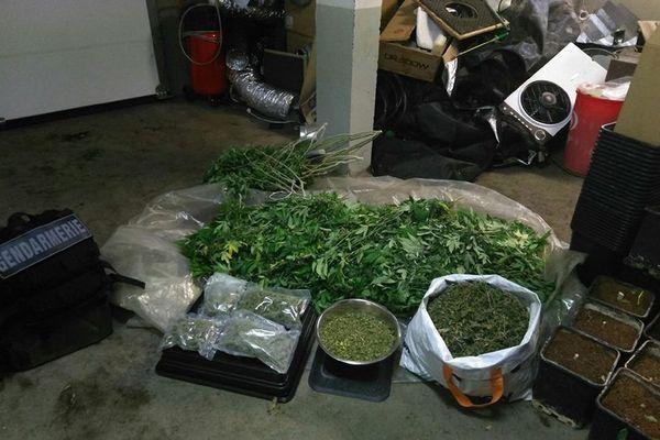 Les gendarmes ont découvert une culture de pieds de cannabis dans une habitation de la commune de Saint Léger les Mélèzes.