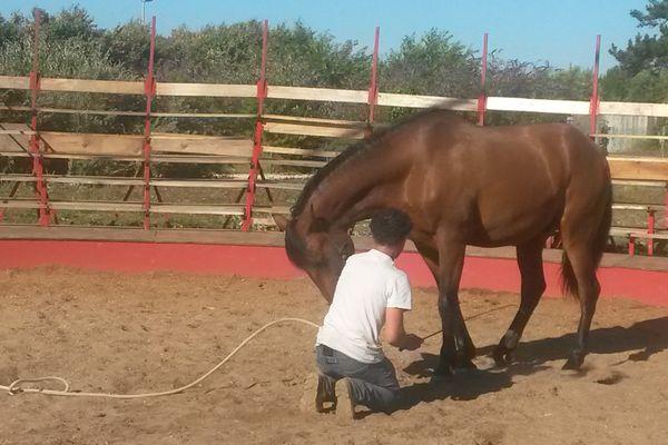 Manu à la baguette pour coucher le cheval d'une star