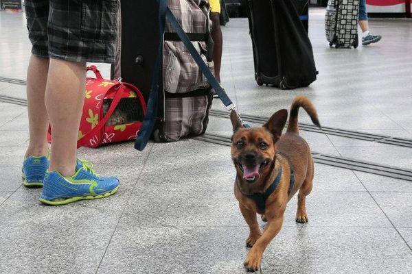 Un chien à la gare de Lyon, à Paris.