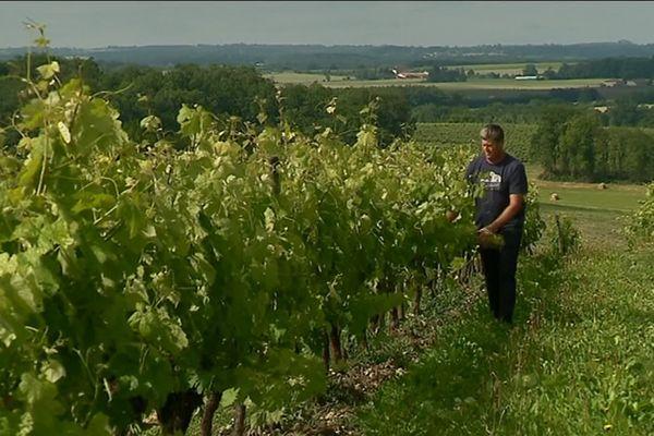 Christophe Charrier, viticulteur à Val des Vignes en Charente, multiplie les pratiques écologiques dans ses parcelles;