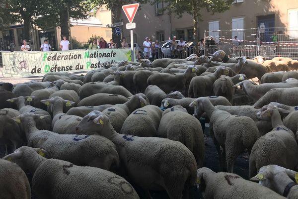 Manifestation de bergers avec leurs troupeaux de brebis contre le plan Loup, à Mende, en Lozère le 26 juillet 2018.