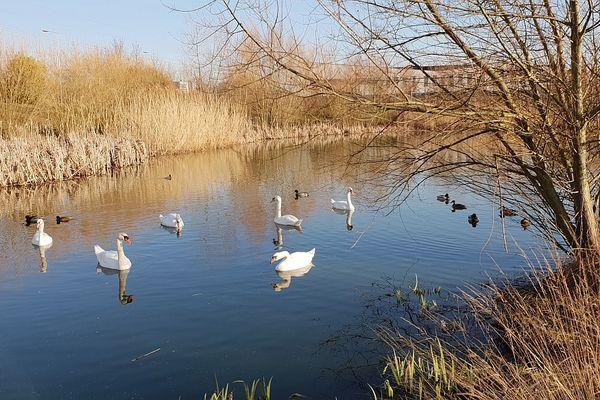 A Bezannes, un bassin paysagé a été créé pour assurer la gestion des eaux pluviales de la ZAC.