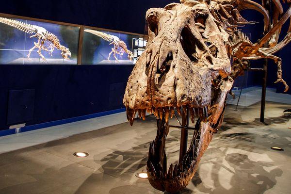 L'exposition qui permet de voir Trix, la T-Rex géante, est prolongée jusqu'aux vacances de la Toussaint.
