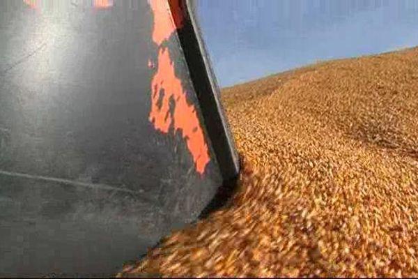 Dans les Hautes-Pyrénées les stocks de maïs ne trouvent pas preneurs