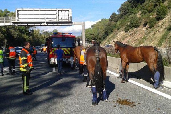 Un vétérinaire est intervenu sur l'A8 pour prendre en charge deux des chevaux, souffrant de plaies et de fractures aux membres.