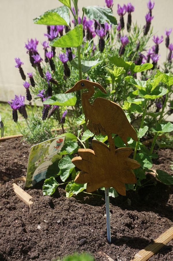 Les plantes et leurs secrets. Venez les découvrir avec Annick.