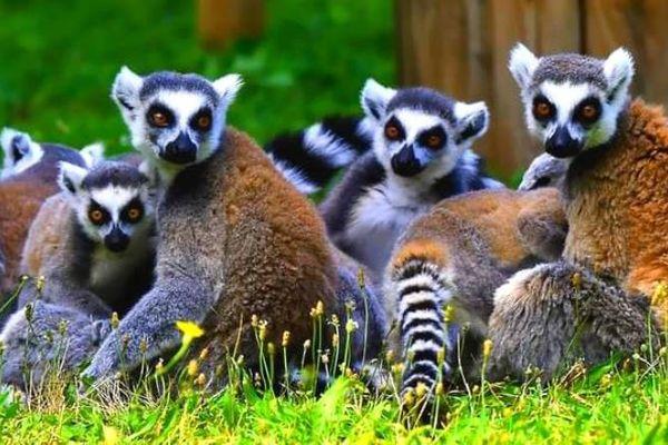 Toute personne ayant des informations pour retrouver ces animaux est appelée à contacter la gendarmerie de Chabeuil au 04 75 59 00 22 ou le Zoo d'Upie au 04 75 84 18 71