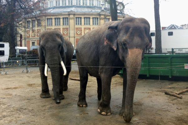 Les éléphants de Lars Hölscher.