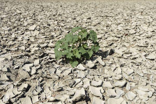 Dans le Lot, les précipitations ont été déficitaires de 40 % en mars et avril, selon Météo France.