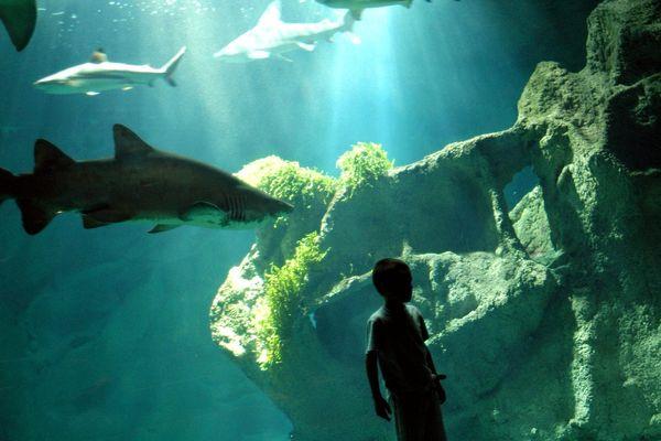 Le bassin des requins est l'un des plus apprécié de l'aquarium rochelais