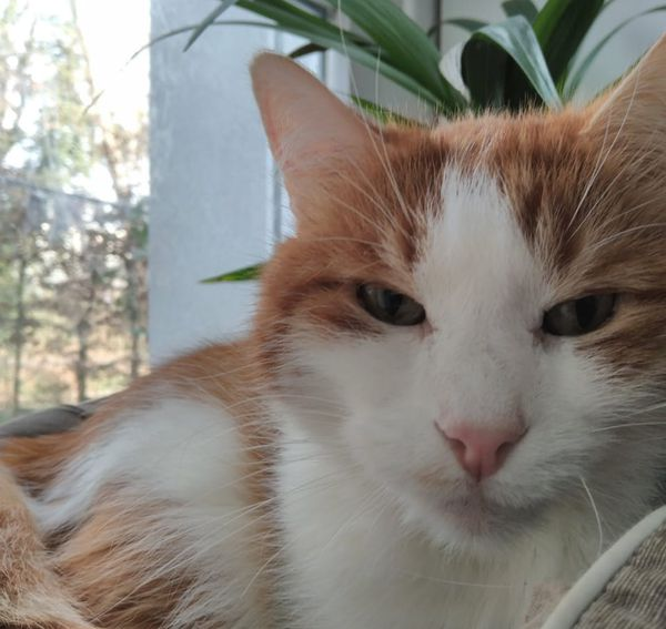 Le chat de Cynthia Weissbraun, passionnée des animaux.