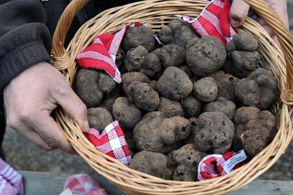 Il y a des choses à vérifier avant d'acheter des truffes.
