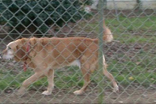 Les animaux sont abandonnés tout au long de l'année, une affluence qui sature les refuges de l'Yonne