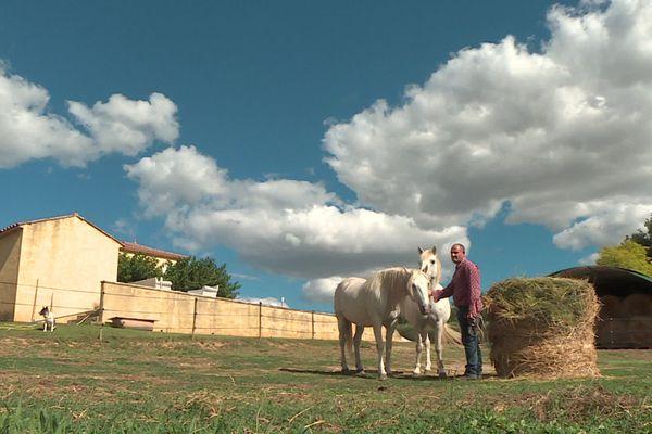 Gard - les propriétaires de chevaux inquiets des cruautés subies par les équidés - septembre 2020.