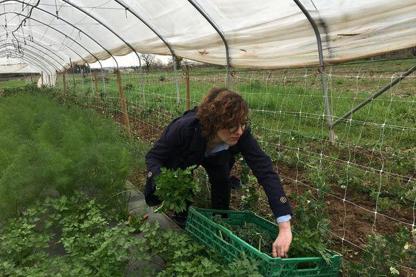 Jessica dans sa serre, récolte des herbes aromatiques.