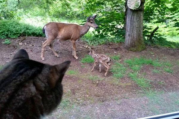 Le chat, Sam, ne rate rien des histoire de cette nouvelle famille dans son jardin.