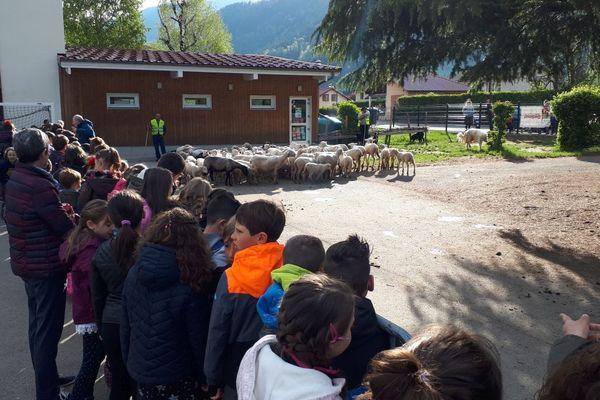 Les élèves ont partagé leur cour avec les moutons