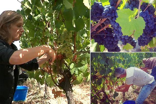 J'ai testé pour vous les vendanges à Châtel-de-Neuvre, dans l'Allier. Une journée à passer dans les vignes et la cave d'un domaine pour découvrir cette activité saisonnière.
