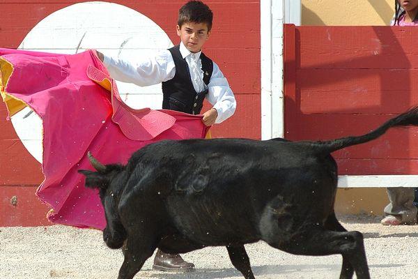 Un élève de l'école taurine d'Arles s'entraîne aux passes de cape avec un jeune taureau - archives- 2007