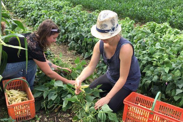Chez Amandine Pacault comme chez tous les maraîchers des Deux-Sèvres, les légumes ont du mal à pousser.