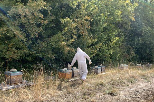 L'emplacement des ruches est important pour la récolte du miel.