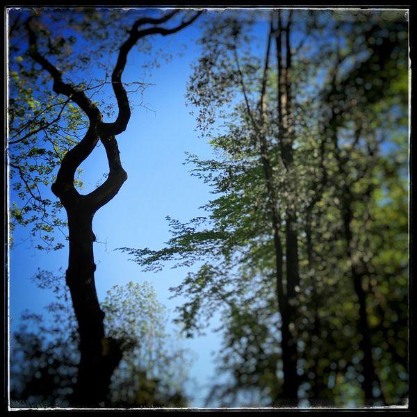 la forêt de Touffou est une des rares forêts péri-urbaines de Loire-Atlantique