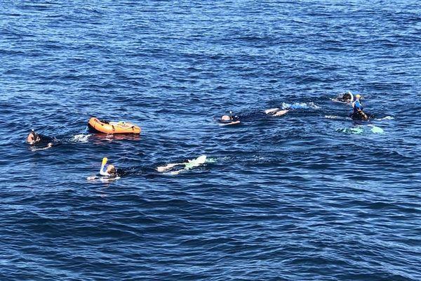 Plus d'une quarantaine d'espèces d'animaux marins peuplent les fonds du Cap d'Antibes.