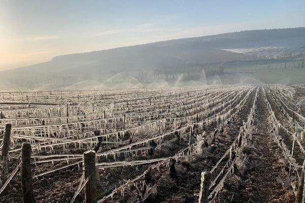 Dans le Chablisien, le domaine Alain Geoffroy asperge ses vignes d'eau pour créer une pellicule d'eau