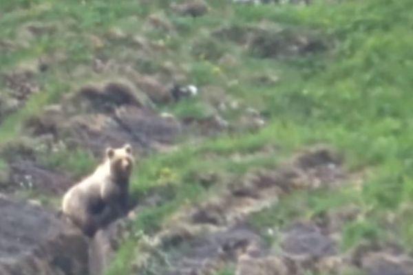Capture d'écran de la vidéo d'un ours des Pyrénées, filmé par un enfant de 9 ans.