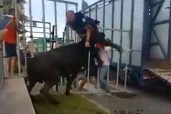 Samedi, un policier municipal a été attaqué et soulevé par un taureau lors d'une bandidoau Grau-du-Roi.