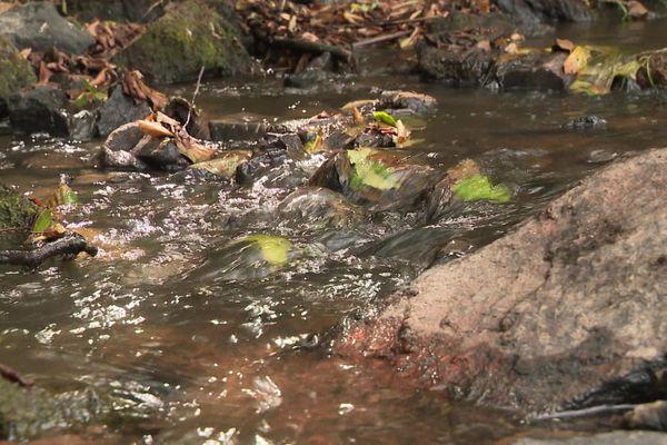 Le ruisseau de la Baize, affluent de la Grosne, a bénéficié de l'eau de l'étang du Paluet