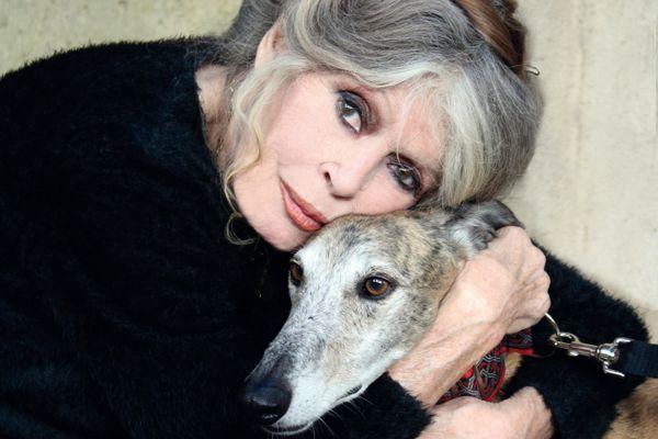 """Dans une lettre ouverte à la préfecture du Var, Brigitte Bardot demande une """"année blanche de la chasse"""" suite à l'incendie qui ravage le massif des Maures."""