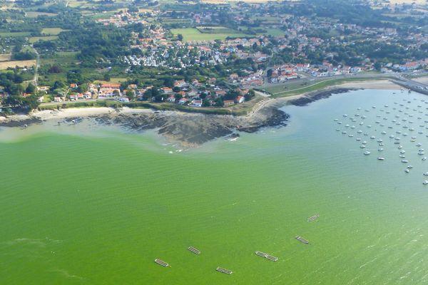 Une mer très verte à cause de la présence d'un phytoplancton, potentiellement nocif pour la faune marine. Photo prise en Loire Atlantique.