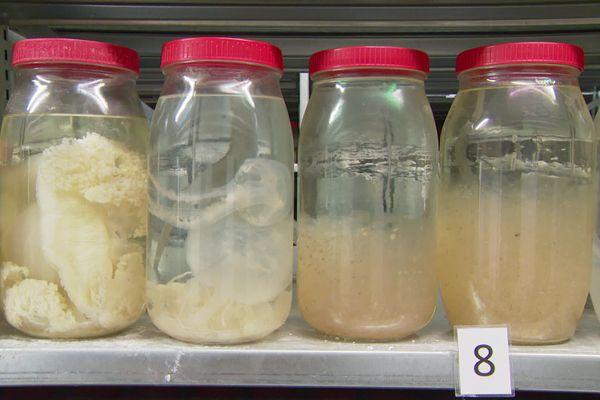 Ces flacons sont remplis de zooplanctons. On y voit par des grandes méduses et des salpes.