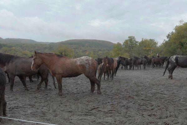 L'ancien enclos boueux des chevaux dans l'Yonne.