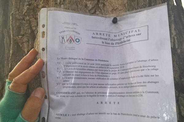 Arrêté municipal contre l'abattage d'arbre entre Pfettisheim et Pfulgriesheim