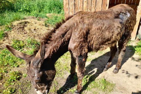 Lors de son arrivée au refuge, Olive était couverte de plaies.
