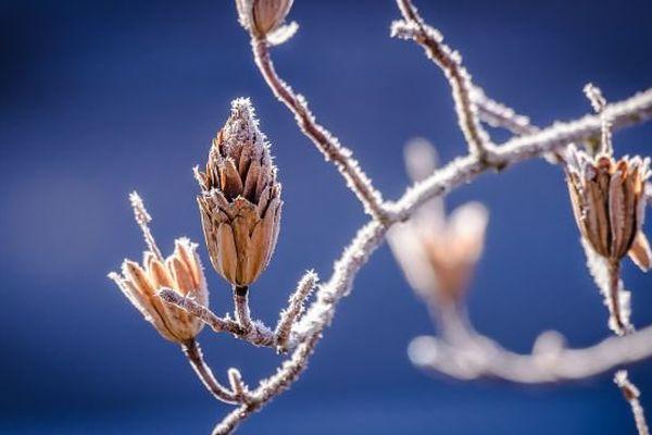 Entre 6 et 10°C les après-midis, il sera toujours judicieux de mettre les manteaux la semaine prochaine en Bourgogne.