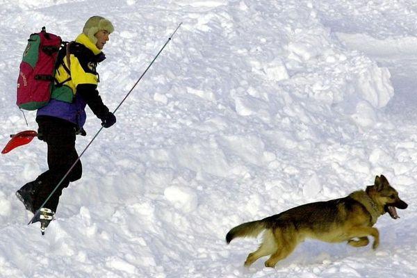 Un chien sauveteur en recherches durant un exercice de recherches