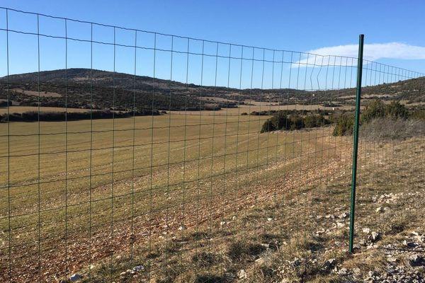 Au nord de l'Hérault, un terrain de chasse privée fait l'objet d'un projet de parc photovoltaïque qui divise la population