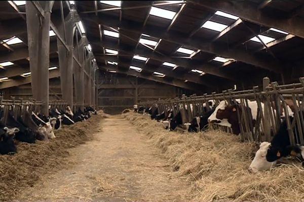 En hiver, les 130 vaches, génisses et veaux sont au chaud. Ca fait du boulot!