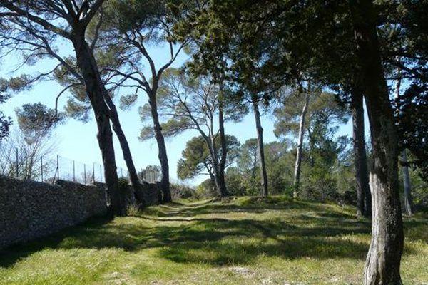La réserve naturelle du Lez, comme le bois de Montmaur à Montpellier sont particulièrement vulnérables en cas d'incendie.