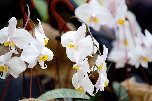 Un centre de production d'orchidées à Fresnes près de Blois.