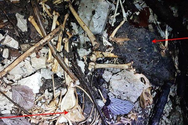 Ces ossements ont été retrouvés dans le gouffre de Prévalot (Jura).