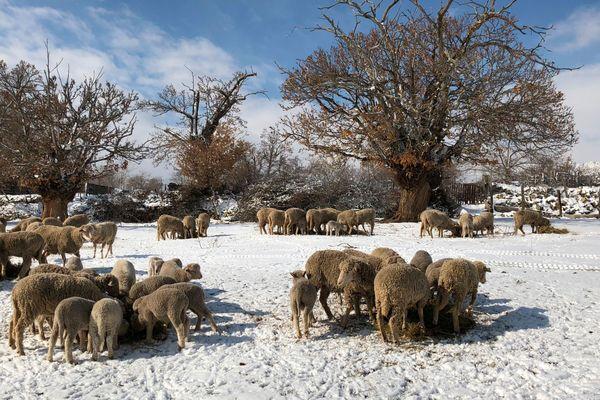 Le repas : un moment crucial pour aider les bêtes à supporter le froid.