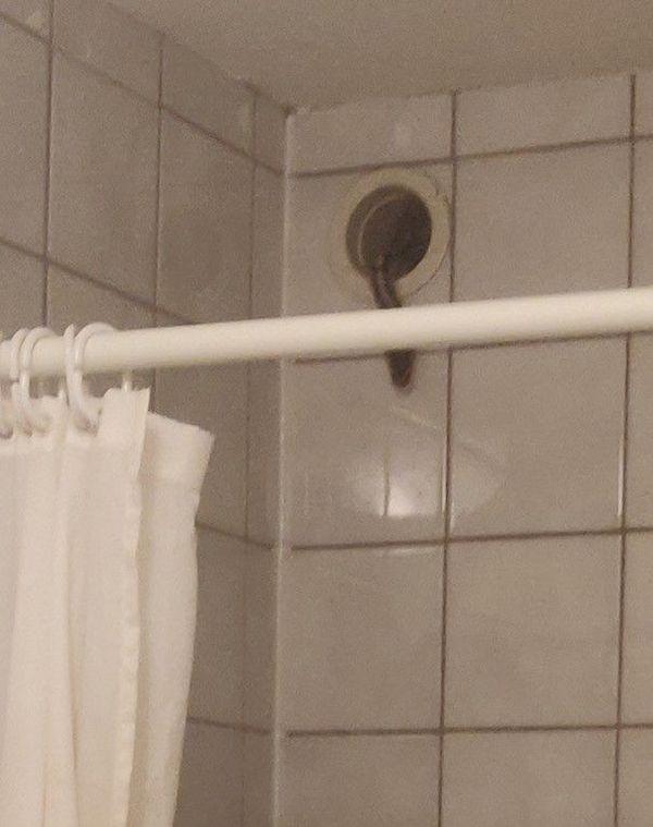 Le python royal a débarqué dans la salle de bain d'un jeune étudiant de 22 ans à Craponne, le 19 septembre dernier. Les sapeurs-pompiers ont récupéré l'animal.